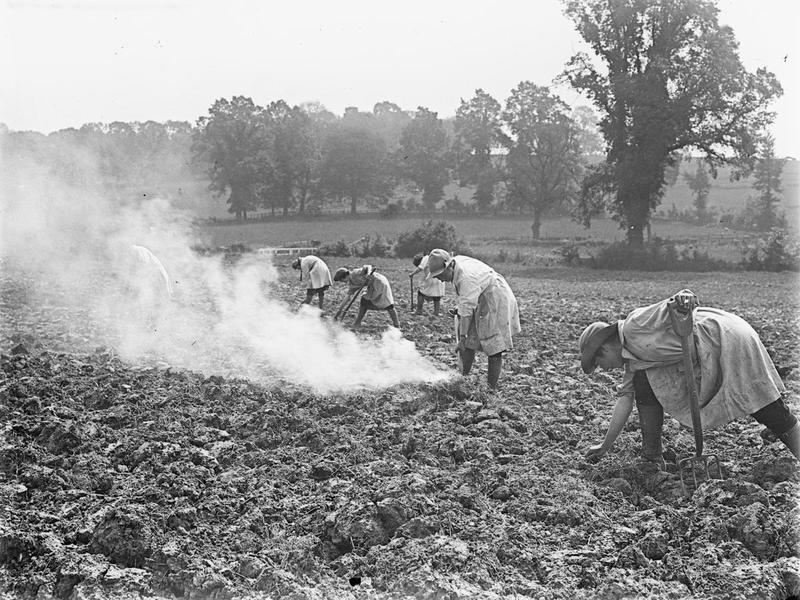 Women's land army working in a field From IWM