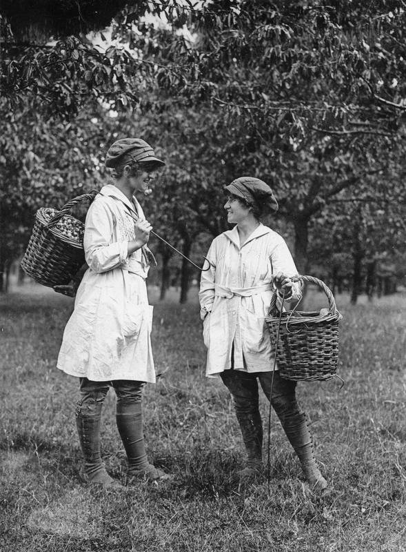 unite eye female fruit pickers baskets of cherries